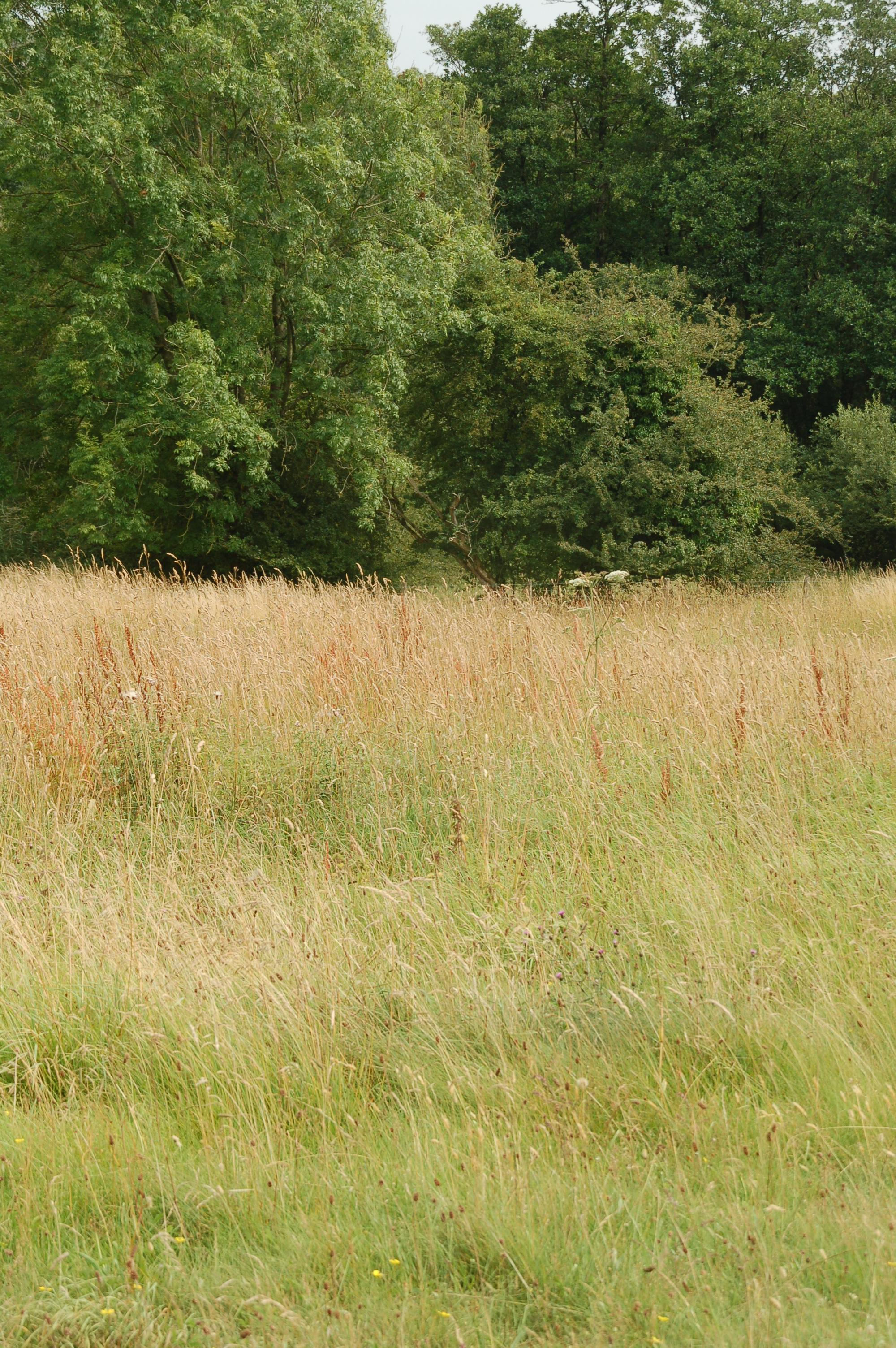 Grassland scrub and woodland at Gait Barrows National Nature Reserve