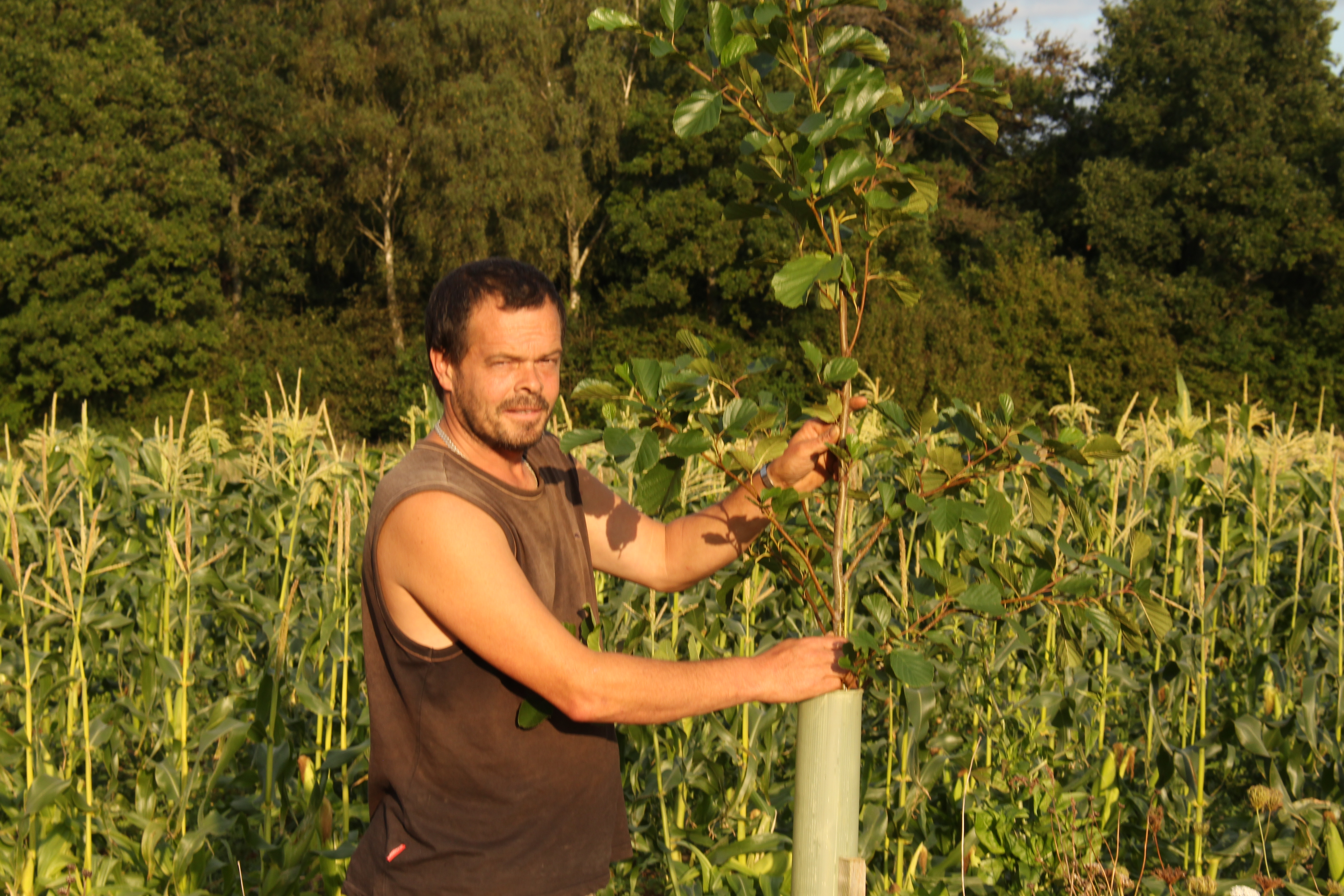 Head grower Andy Dibben carrying out silvohorticulture at Abbey Home Farm