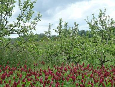 How can agroforestry contribute towards biodiversity conservation?