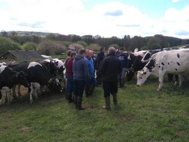 Leading the way on reducing antibiotic use on farm