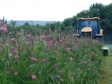 Grasslands & forage crops