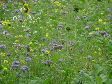 Pollinator Flower Mix, Allerton