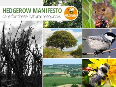 Hedgerow Manifesto cover