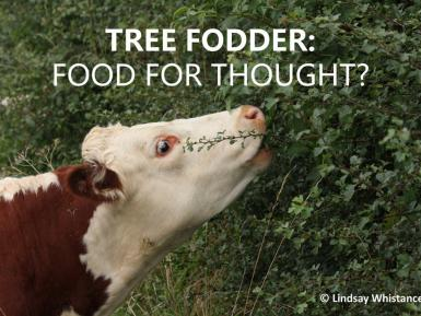 Tree Fodder Food For Thought