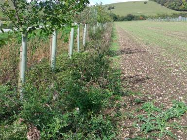 Agroforestry for Growers