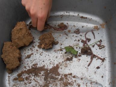 Counting earthworms