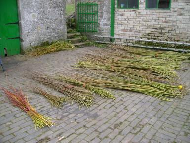 Cut Willow