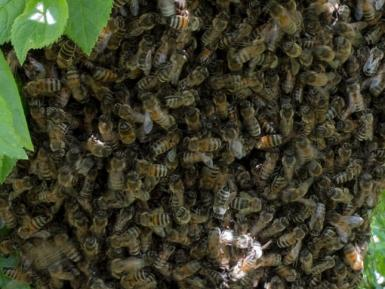 Cropped photo of honeybees by Daylesford Organic