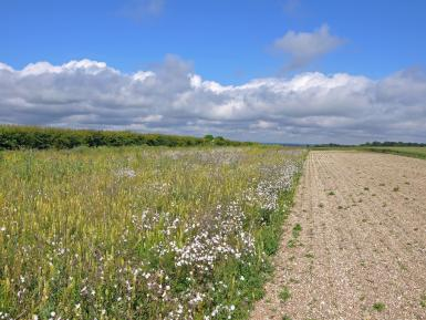 Flower & new sown multi-species ley. Peter Thompson- GWCT