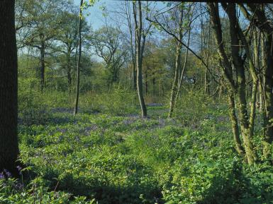 Two-year coppice -Thorpe Wood - Peterborough