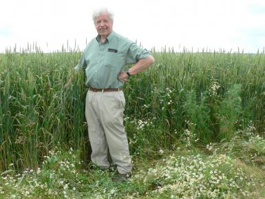 Martin with ORC Wakelyns Population wheat