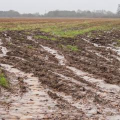 Rainwater running off of saturated arable field