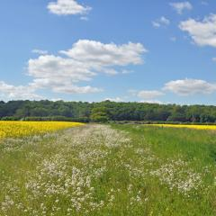Wild flower strip between rape fields (1)