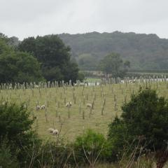 Agroforestry Trials, Allerton