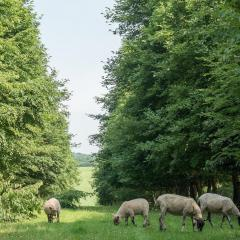 Sheep grazing between trees at Little Hidden Farm near Hungerford