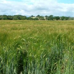 Achieving more from less with dairy and arable collaboration