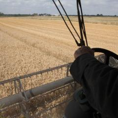 Farming wheat without neonicotinoids