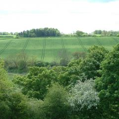Trees and arable field
