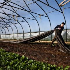 Daylesford farm polytunnel preparation in March
