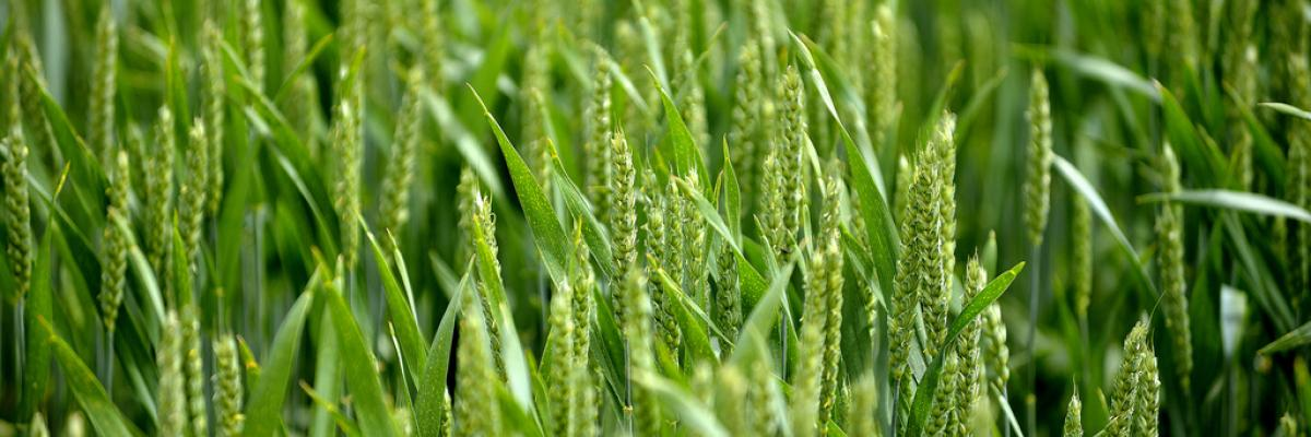 National Organic Cereals 2013