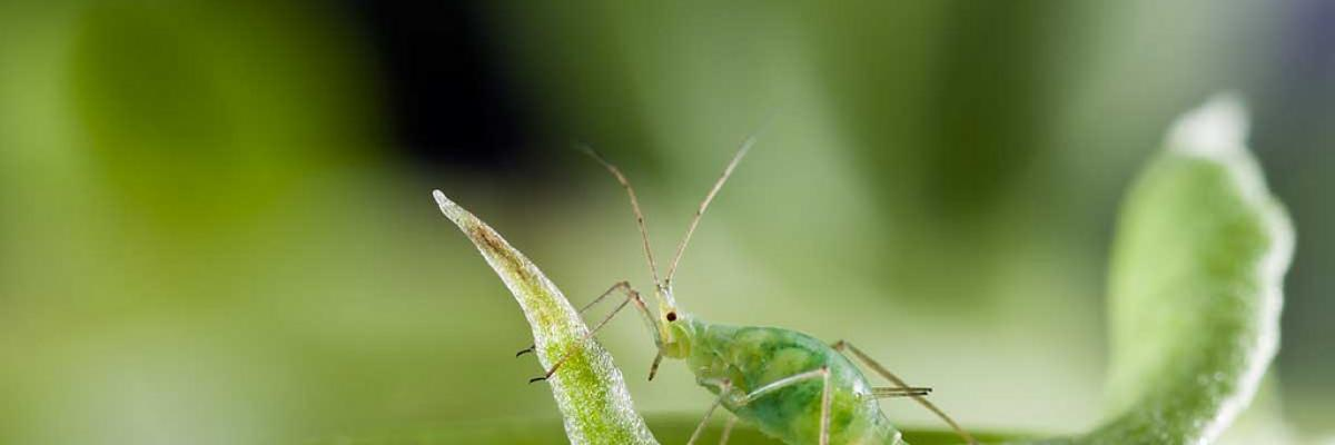 RRes-photo-story-comp-aphid-for-flickr