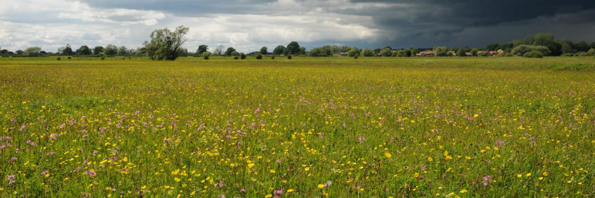 Hay meadows Lower Derwent Valley NNR
