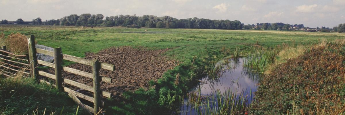 Grazing marshes/dyke